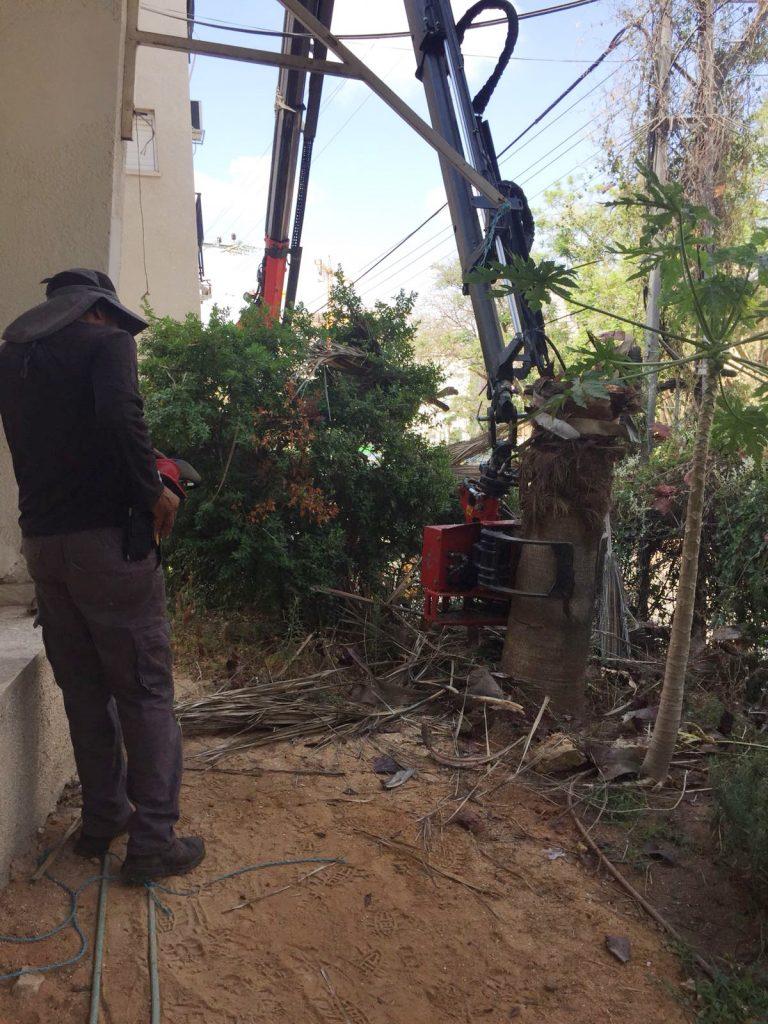 כריתת עצים בכפר סבא