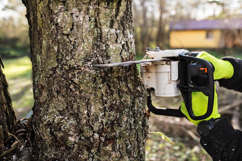 כריתת עצים בשטח פרטי